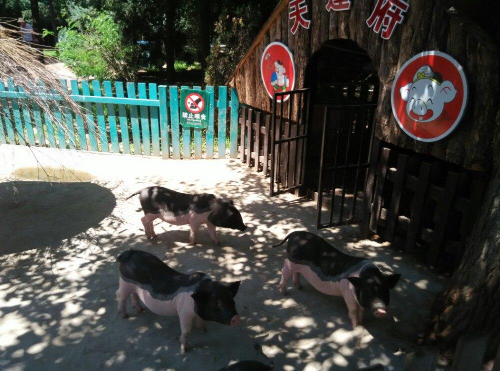 沈阳森林野生动物园