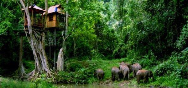 会忘记这个节目有一站就是野象谷,重重的热带雨林看上去原始气息浓厚图片