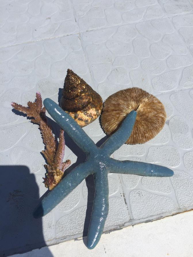 沙巴攻略自由行-香格里拉攻略土豪【携程攻略猫猫村暖洋洋游记g图片