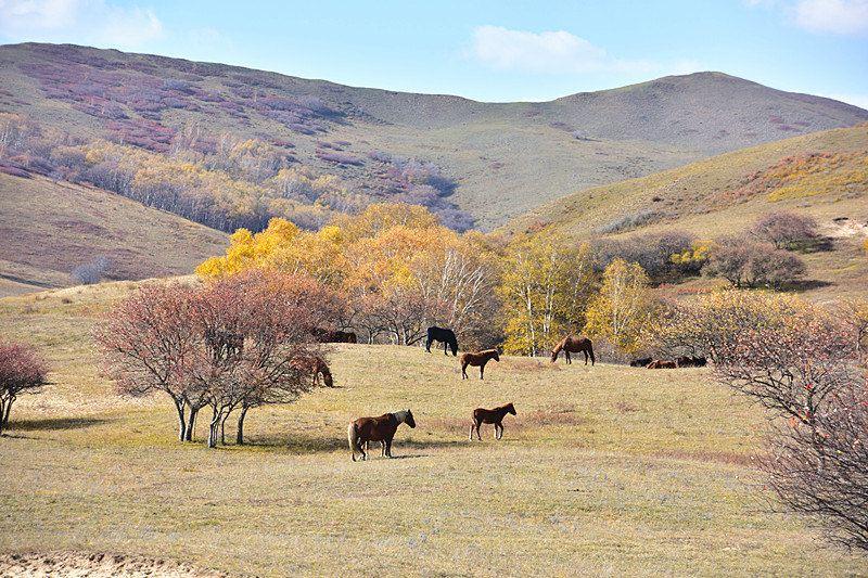 """俄罗斯诗人叶塞宁著名的赞美诗:""""白色桦树站我窗下,披一身雪,好似银甲"""