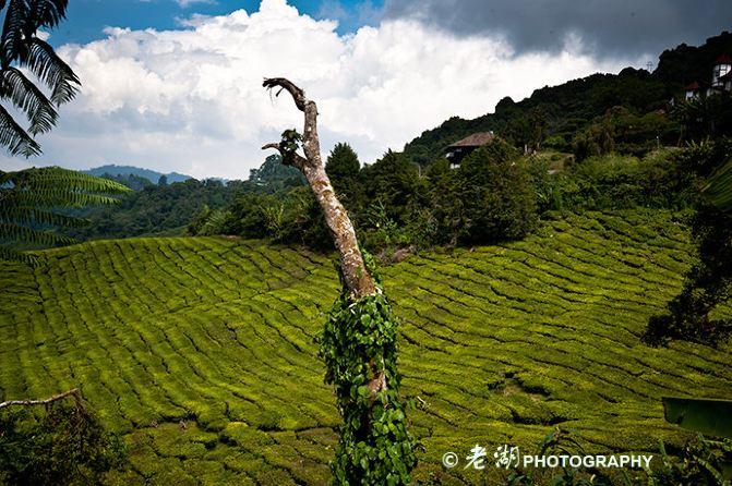 英国人最喜欢的马来西亚度假地--金马伦攻略-漆黑的魅影v攻略高原大全图片