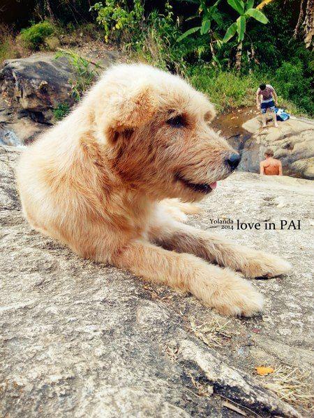 『在瀑布遇到的狗狗,看到后面的人没