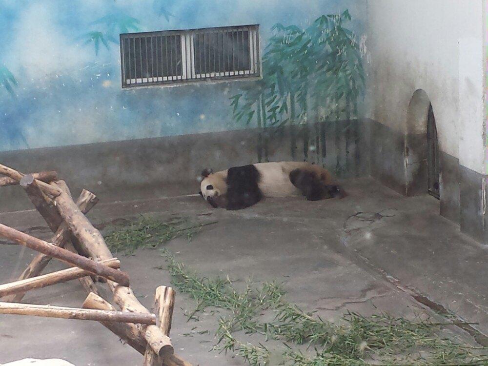 【携程攻略】江苏红山森林动物园景点,动物园坐地铁去