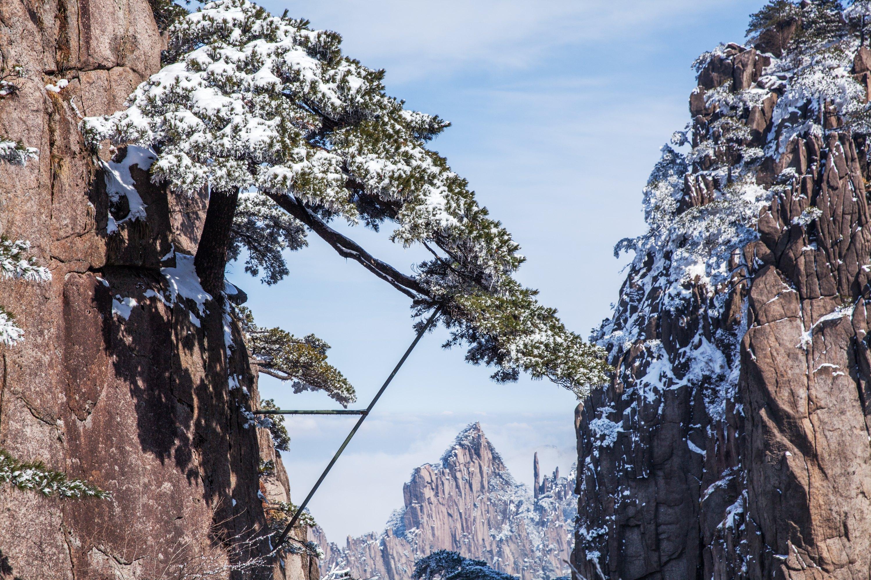 壁纸 风景 树 松 松树 3000_2000