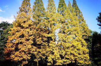 金城山森林公园门票,南充金城山森林公园攻略 地址 图片 门票价格
