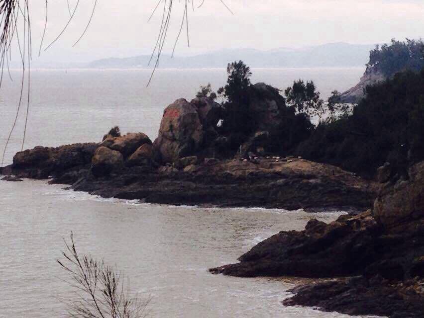 【携程攻略】浙江大鹿岛景点,东海仙岛之称一大鹿岛!