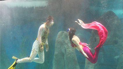 海洋生物表演区>,每周定期更新海洋动物表演,如海狮,海豹,海豚等;