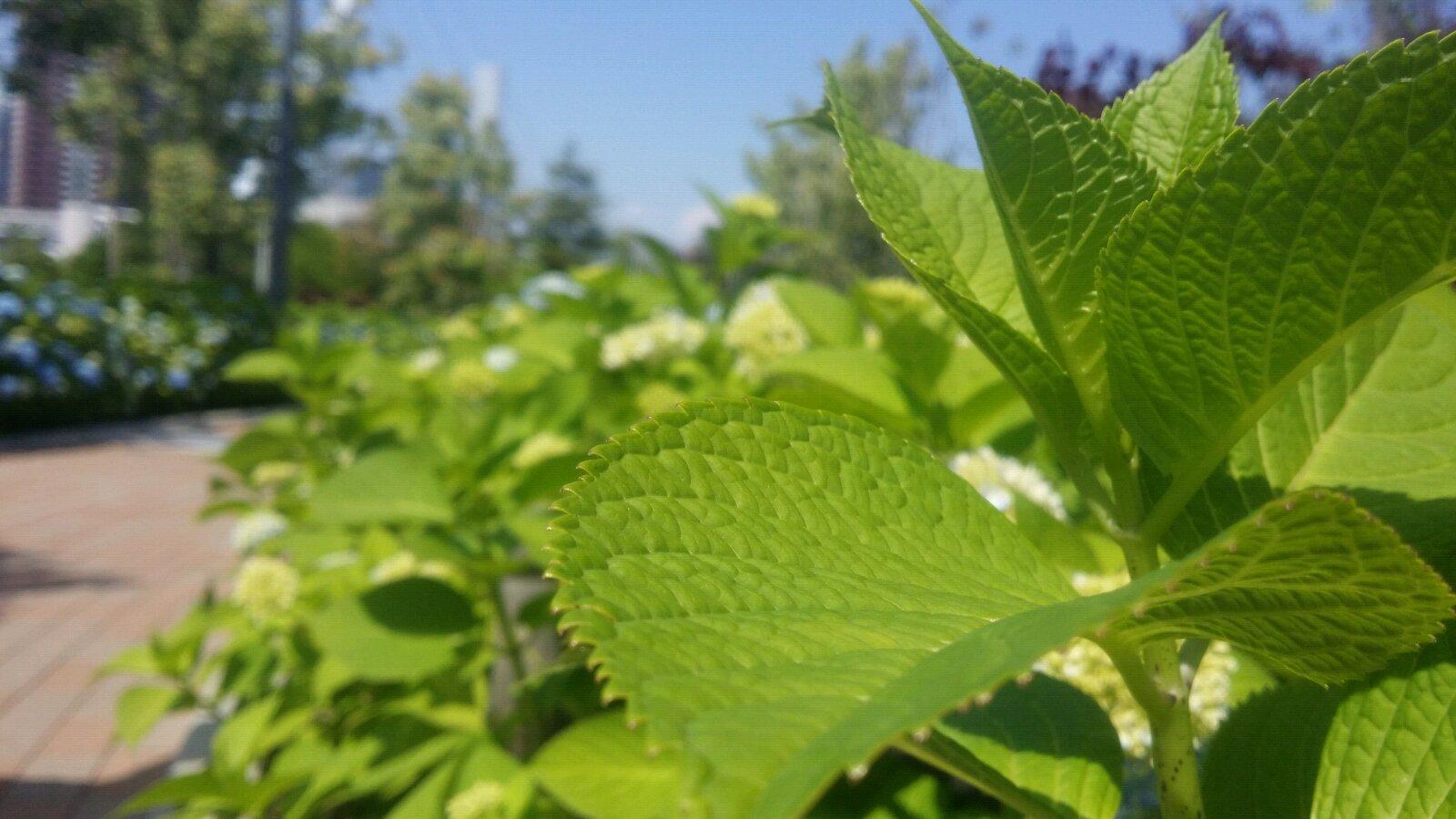 背景 壁纸 绿色 绿叶 树叶 植物 桌面 1600_900