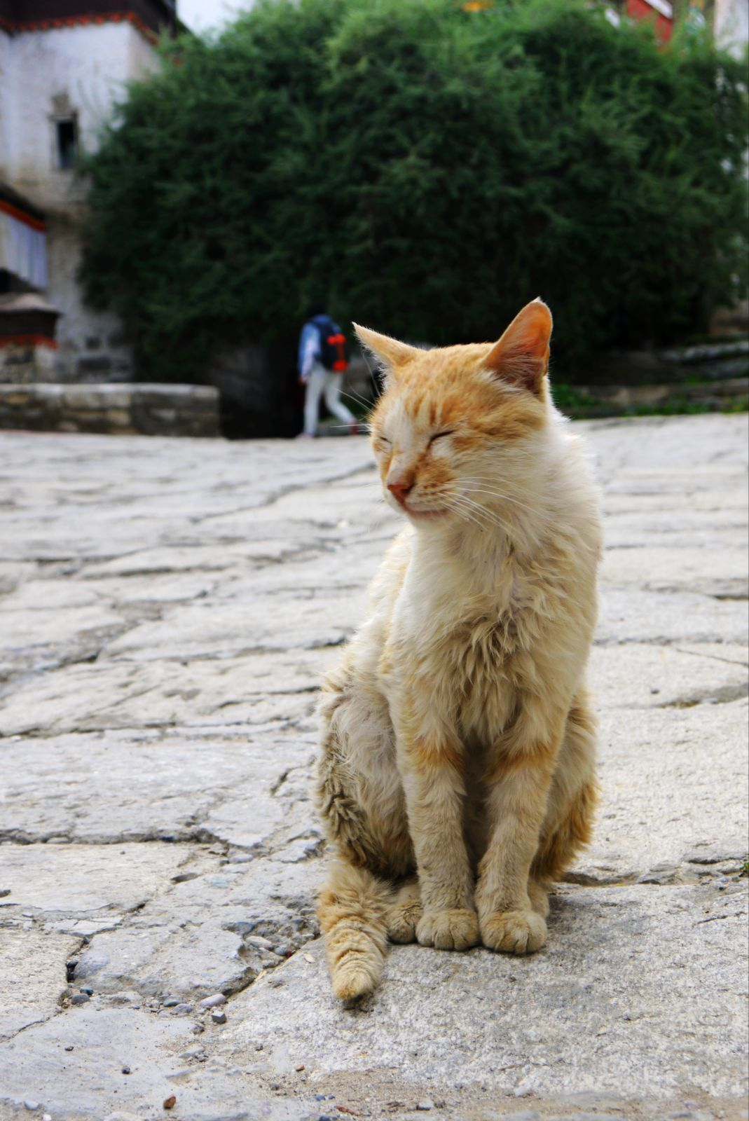 壁纸 动物 狗 狗狗 猫 猫咪 小猫 桌面 1069_1600 竖版 竖屏 手机