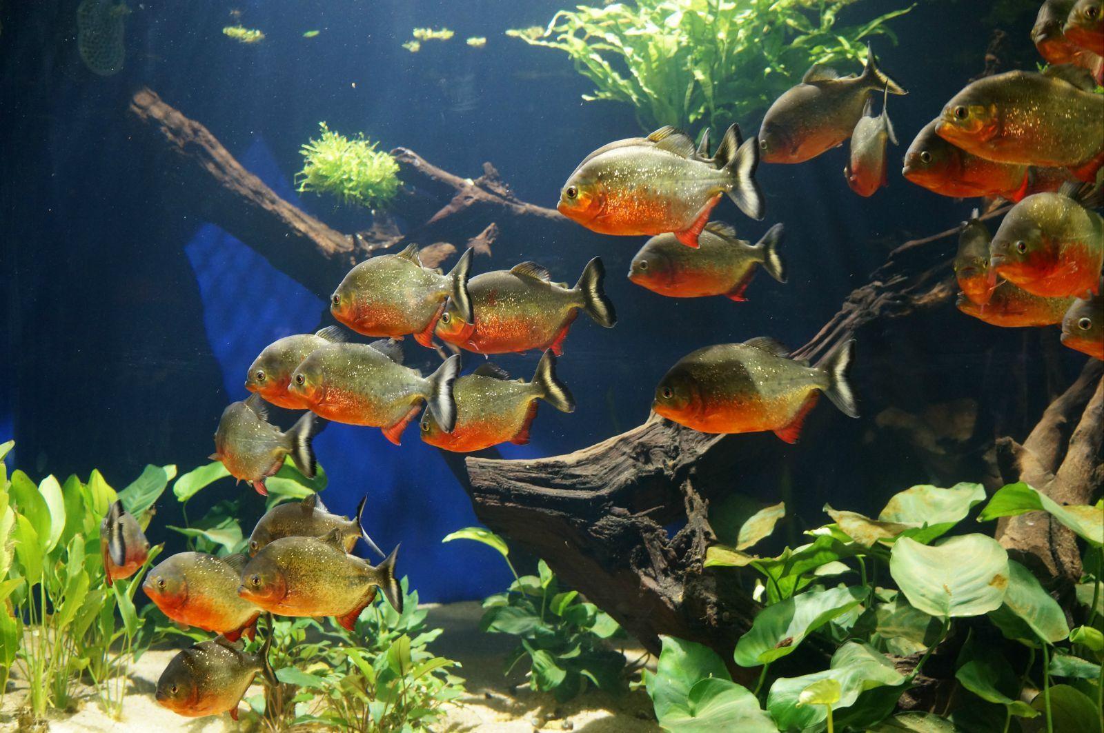去过北京动物园海洋馆或者大连老虎滩海洋公园的朋友,可以忽略这个