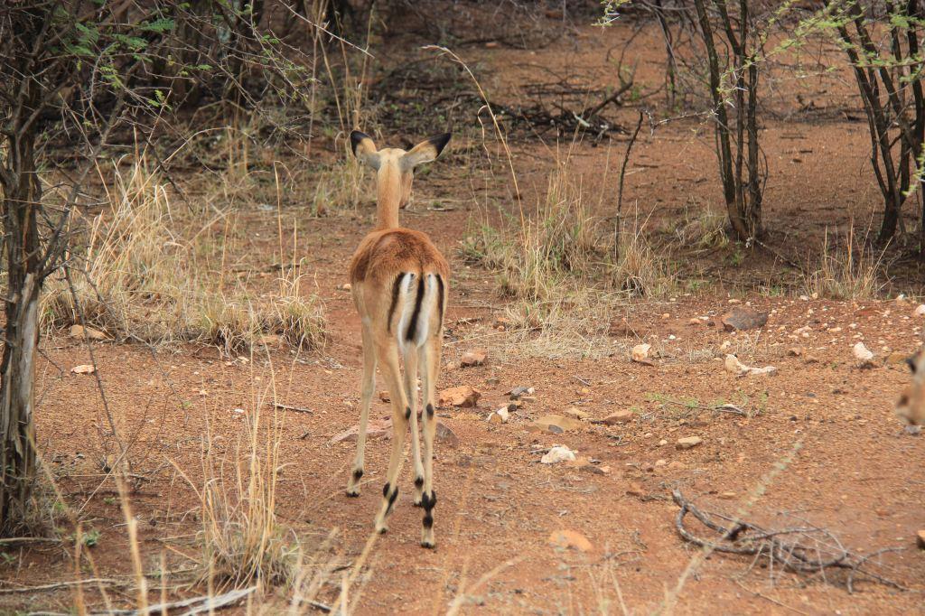 动物园是南非第四大野生动物园(野生动物园保护区)