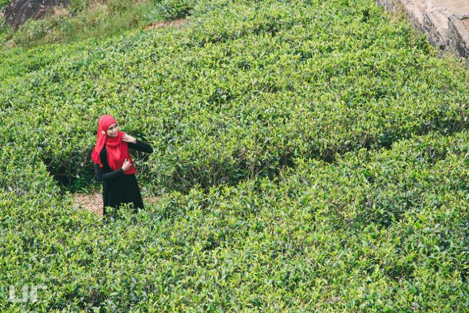 其实这位游客只是裹了层红色头巾,在万绿丛中格外明显而已.