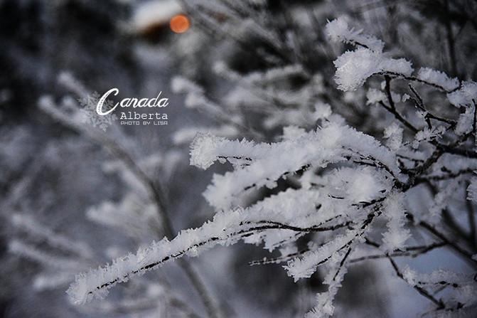 树枝上,结成冰渣,形状精致美妙,冬天的风景,处处可见源于大自然的艺