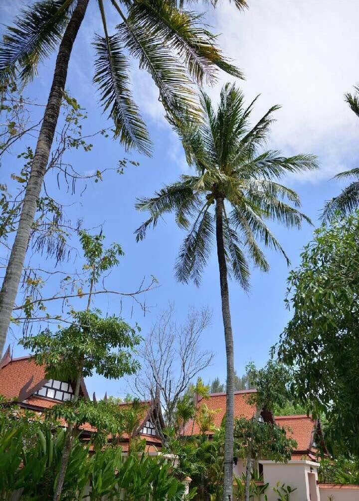 椰子树在蓝天白云下,在清风中摇曳着