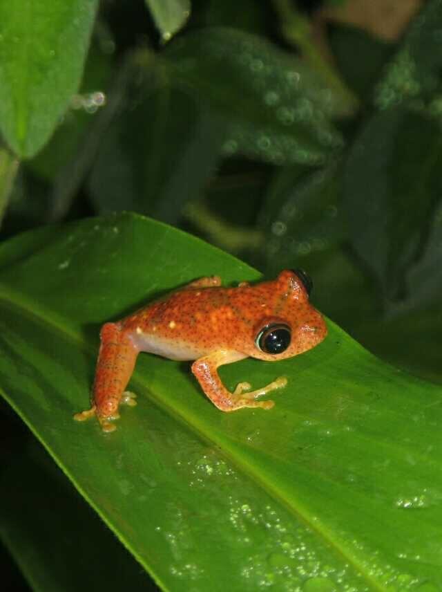 昂達西貝國家森林保護區  Andasibe Reserve   -1