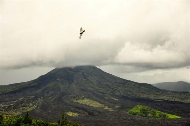 巴厘岛自由行7日5晚-第3天乌布酒店-象窟-圣泉春节攻略高速免费图片