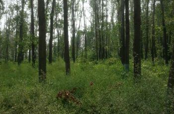 郑州森林公园附近景点