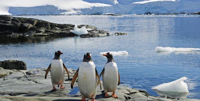 创意绘画画南极动物