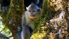 塔城滇金丝猴国家公园