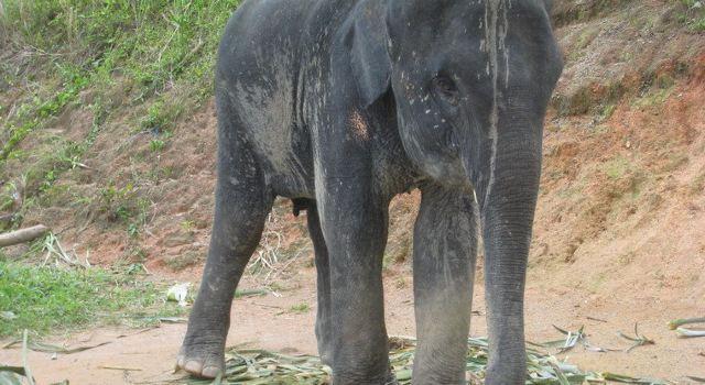 壁纸 大象 动物 640_350