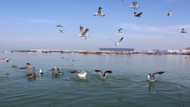 金石滩喂海鸥海上垂钓