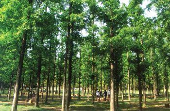 徐州泉山国家森林公园附近景点,泉山国家森林公园周边