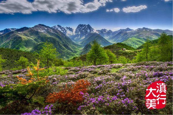【大美滇行】丽江云南泸沽湖香格里拉梅里雪山雷山小攻略图片