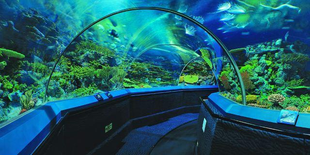 壁纸 海底 海底世界 海洋馆 水族馆 桌面 640_320