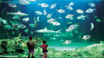 世界上最大种类的鲨鱼和鳐鱼等共计700多品种的13,000多只水生动物.