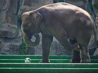 维也纳国际酒店(上海惠南店)1晚+上海野生动物园门票·【毗邻景区】