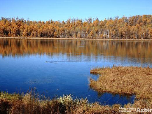 阿尔山国家森林公园图片