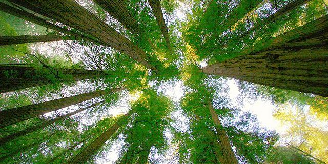 森林的简笔画写