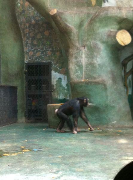 我在济南动物园欣赏可爱的动物们,静待春暖花开!