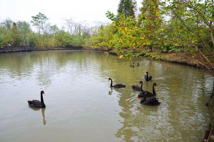 溱湖风景区冬季