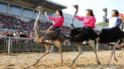 深圳野生动物园门票(成人票) 豪华五星深圳深航国际酒店,感受大自然的