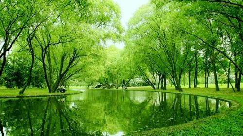 共青森林公园