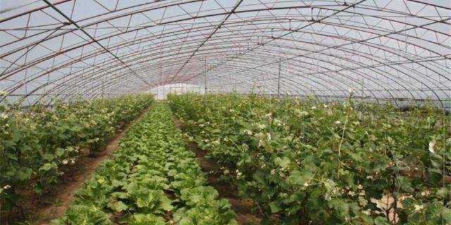 北大荒阿城农场有机生态园