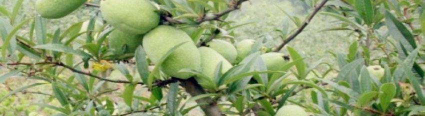 宣木瓜景区
