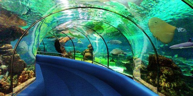 长沙海底世界位于长沙市开福区