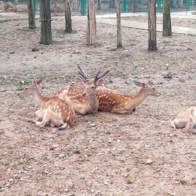 南昌动物园一天游玩