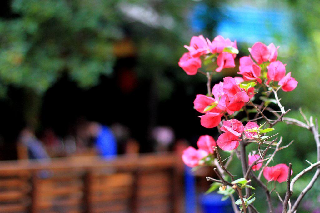 2014年六月自驾大理丽江香格里拉虎跳峡泸沽湖攀枝花元谋土林(一)大理图片