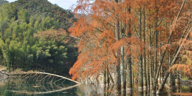 阳明山国家森林公园_永州图片