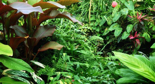 世界花园城市---墨尔本---3皇家植物园(2)---暨周边公园