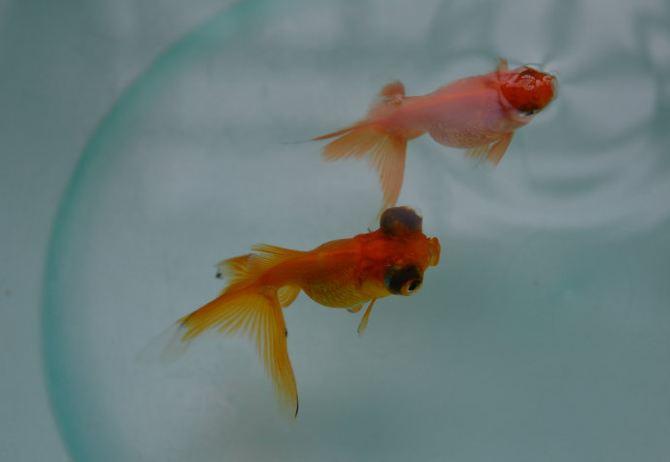 美丽可爱的小金鱼 - 上海游记攻略【携程攻略】
