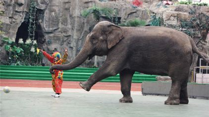 【精品特惠】上海野生动物园 莫泰168(上海南汇新场古镇店)