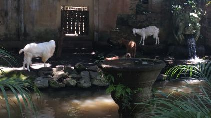 巴厘岛动物园门票多少钱