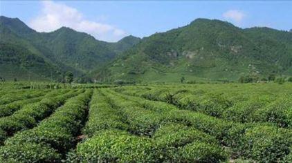 西九华山旅游风景区森林覆盖率达95%以上,并有多处原始森林;整个景区