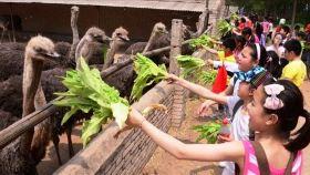 金鹭鸵鸟游乐园