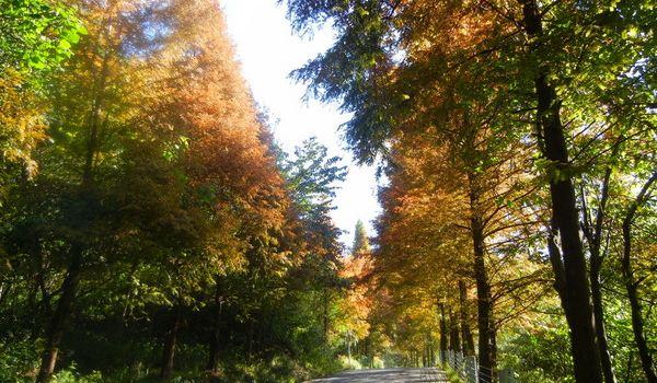 壁纸 风景 森林 桌面 600_350