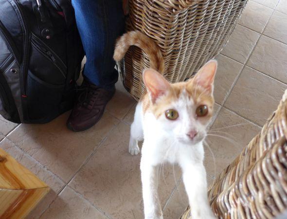 最萌小猫咪撒娇可爱图片